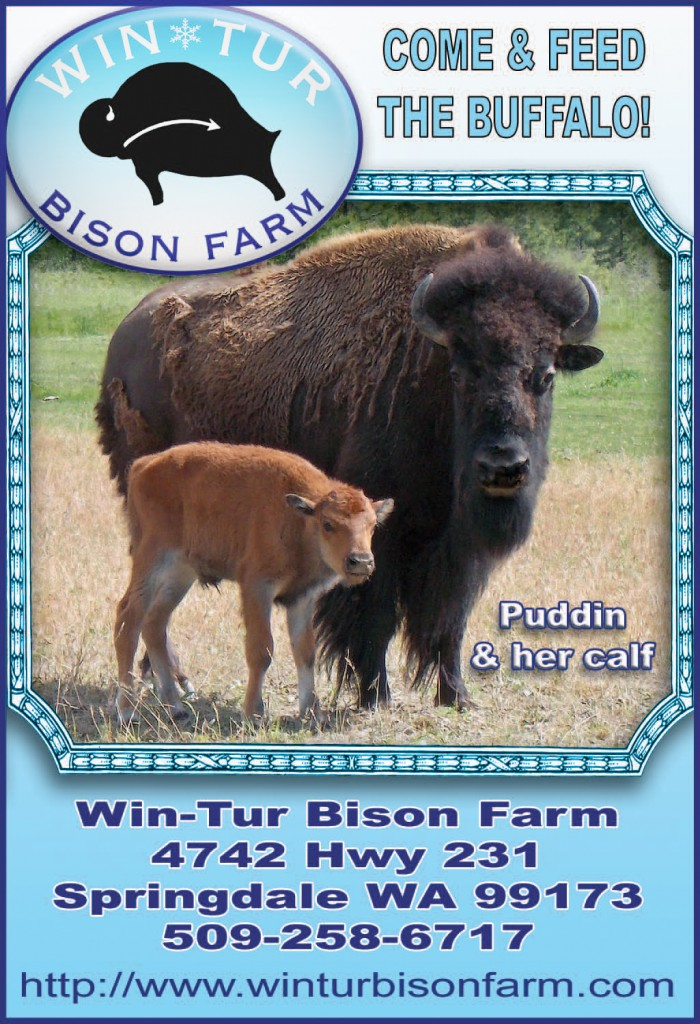 Huckleberry-Press-Win-Tur-Bison