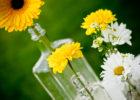 Hanning-Flowers-thumb